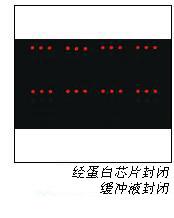 Whatman 蛋白芯片缓冲液和试剂, 10485331, 10485356, 10485330